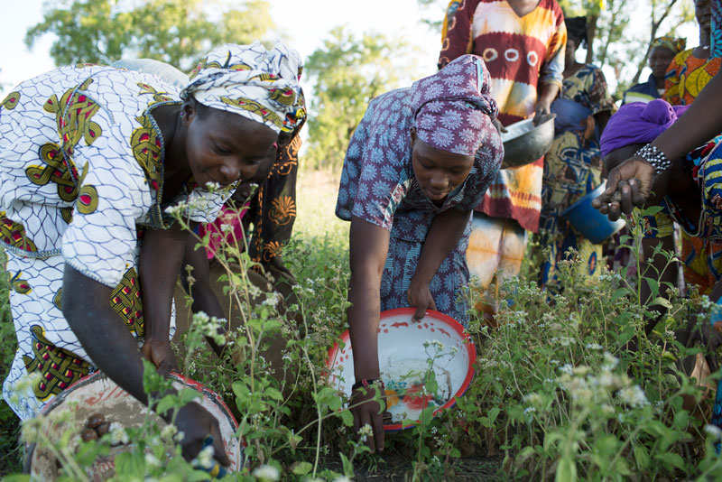 In addition to financing, IFC will offer training to members of women-led cooperatives that work with Mali Shi.