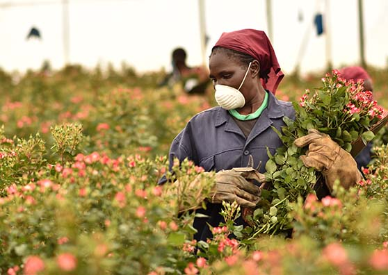 Thumbnail:How a Kenyan Flower Producer Bloomed Through COVID-19