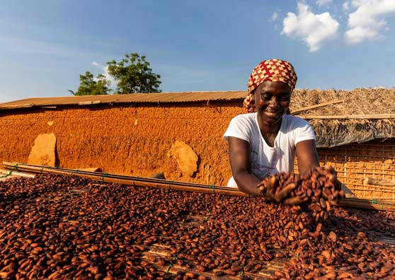 Cocoa Cooperatives—and their Farmers—Get a Fresh Start