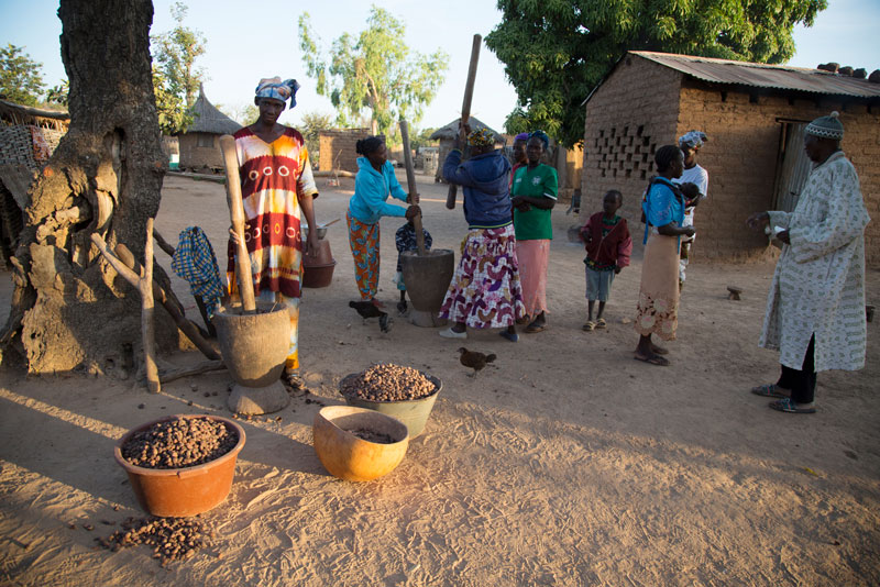 Mali is the world's second-largest producer of the shea nut, accounting for 20 percent of the global supply.