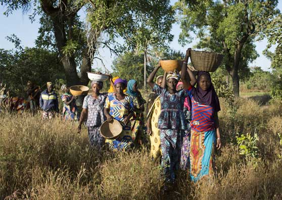 Mali's Shea Nut Industry Takes Root—and Women Farmers Benefit