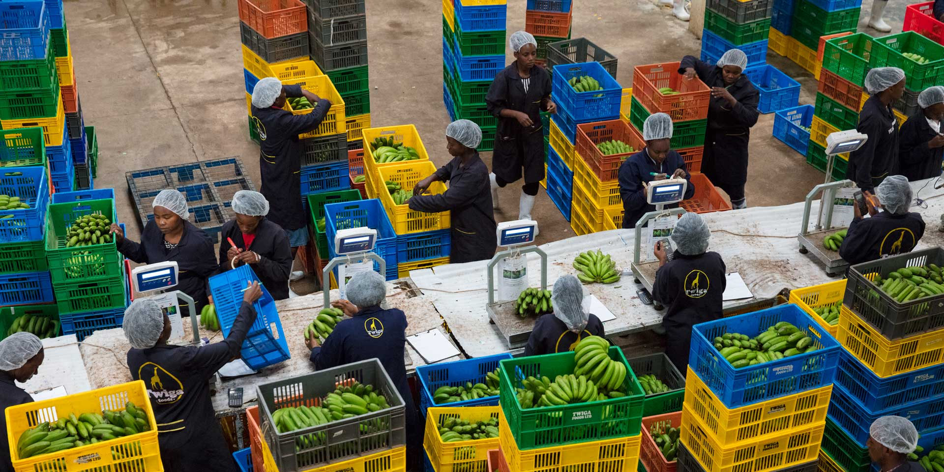 Technology Helps African Farmers Sell What They Sow