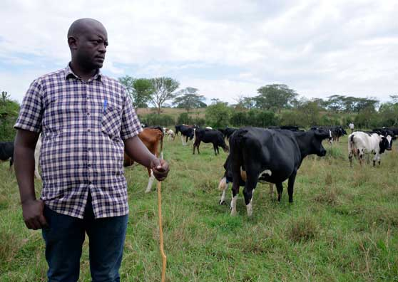 Uganda's Dairy Farmers Develop a Taste for New Markets