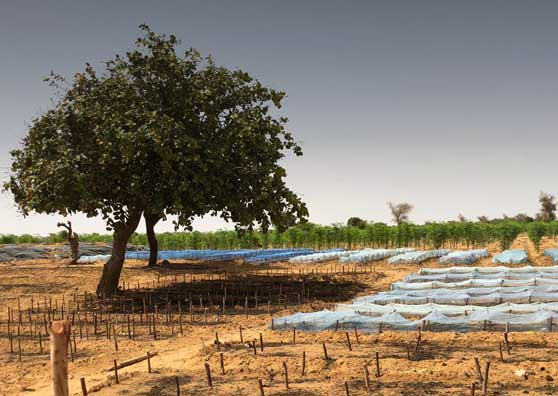 Planting a Climate-Resilient Future for Niger