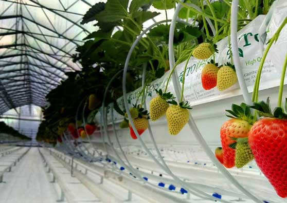 Thumbnail:Investments in Armenia's Greenhouses Bear Fruit