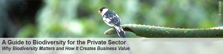 A Guide to Biodiversity for the Private Sector - Why Biodiversity Matters and How It Creates Business Value